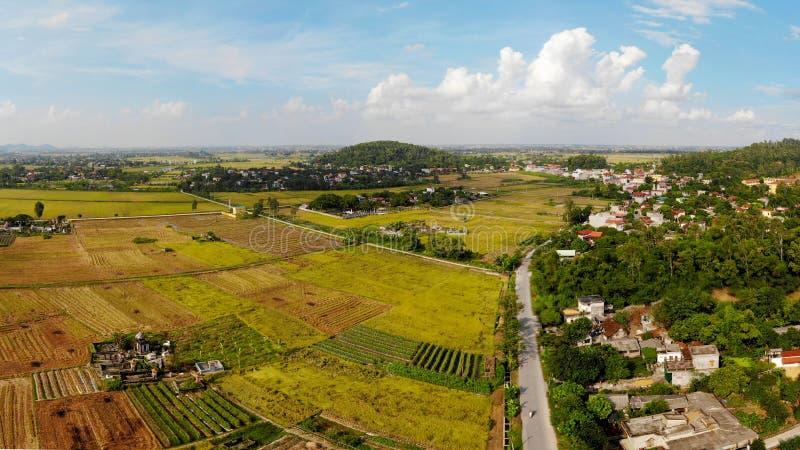 A montanha pequena é cercada por campos dourados do arroz imagem de stock