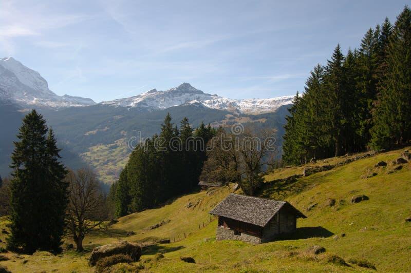 Download Montanha suíça cénico imagem de stock. Imagem de ninguém - 16853799