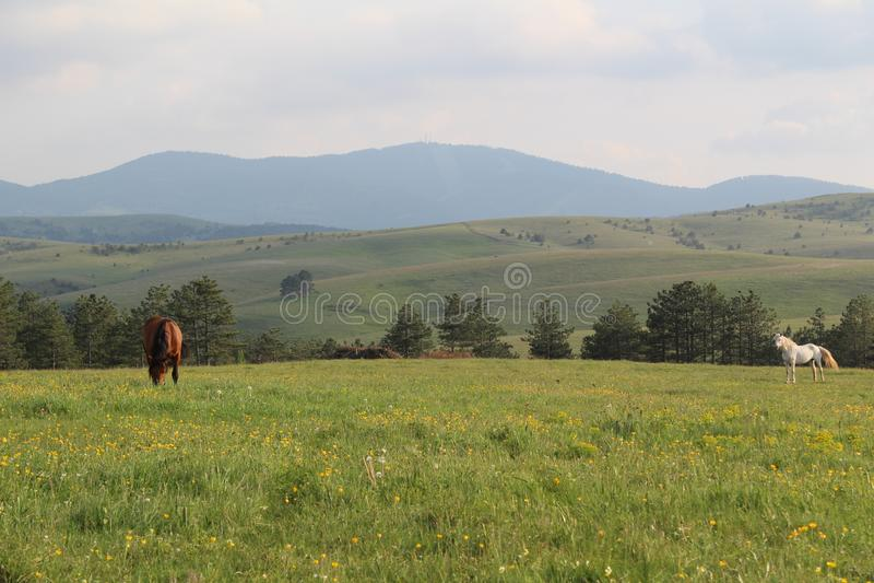 Montanha Zlatibor imagens de stock royalty free