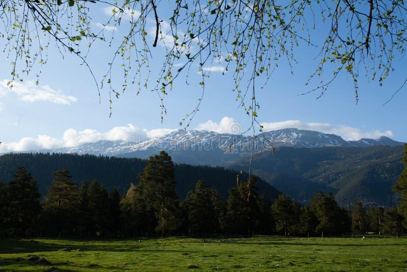 Montanhas adiantadas da mola fotografia de stock royalty free