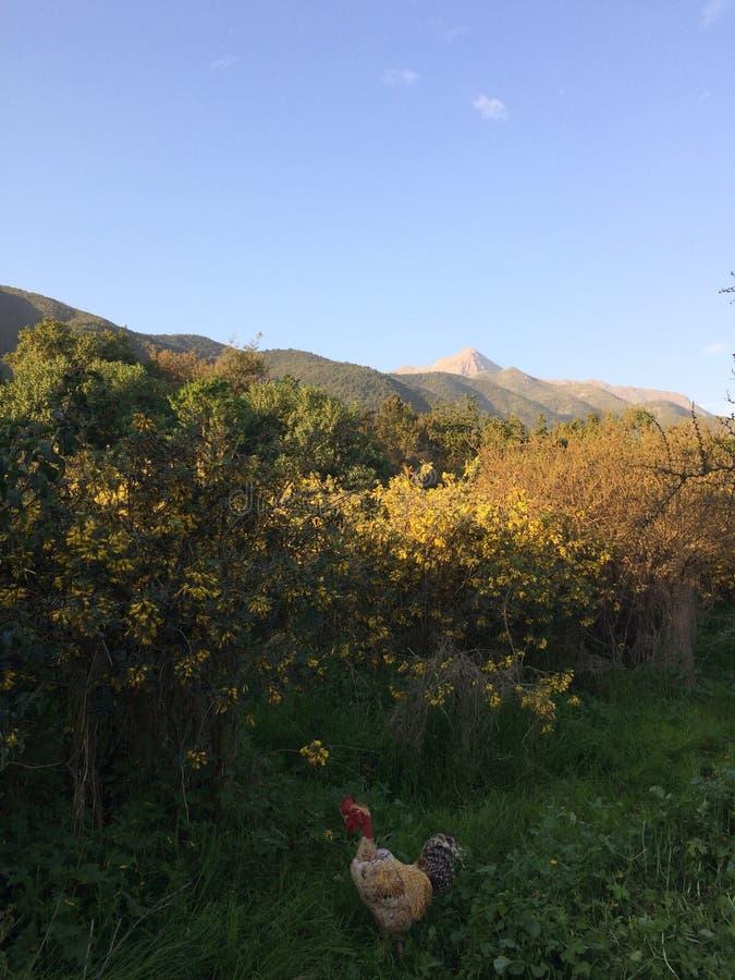 Montanhas andinas imagem de stock