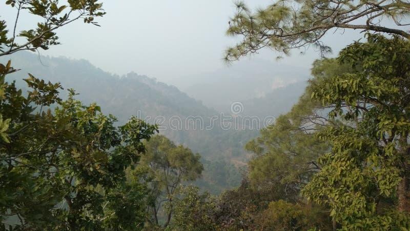 Montanhas cobertas com as árvores bonitas imagem de stock royalty free