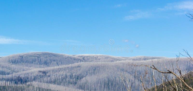 Montanhas cobertas com as árvores inoperantes, Warburton do leste, Austrália imagens de stock