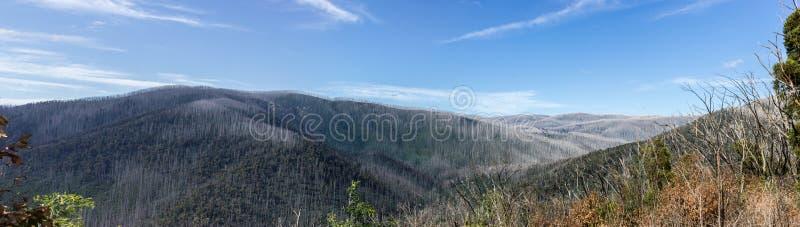 Montanhas cobertas com as árvores inoperantes, Warburton do leste, Austrália fotografia de stock royalty free