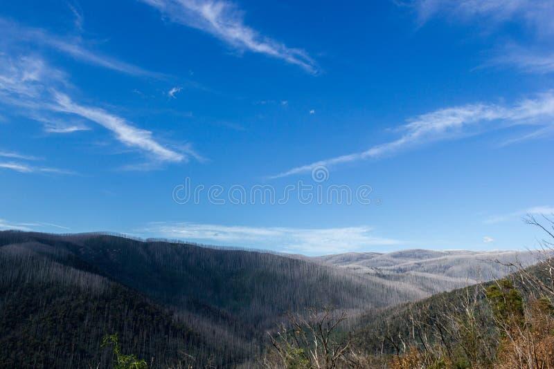 Montanhas cobertas com as árvores inoperantes, Warburton do leste, Austrália imagens de stock royalty free