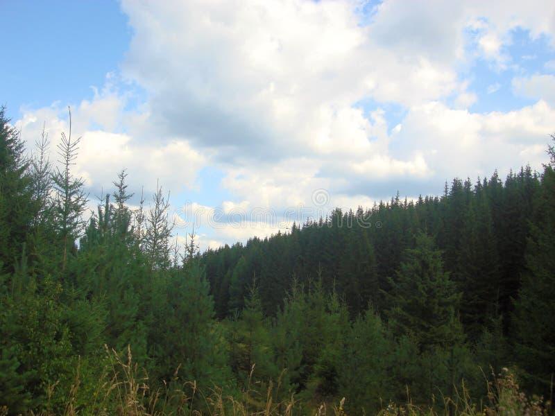 Montanhas cobertas com as florestas imagem de stock