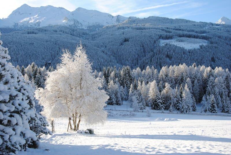 Montanhas cobertas com a neve foto de stock royalty free