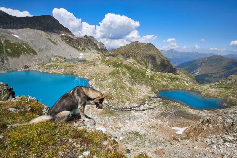 Montanhas de Cáucaso no verão, o derretimento do lago do lago Arkhyz Sófia do cume da geleira Montanhas altas bonitas de Rússia,  fotografia de stock royalty free
