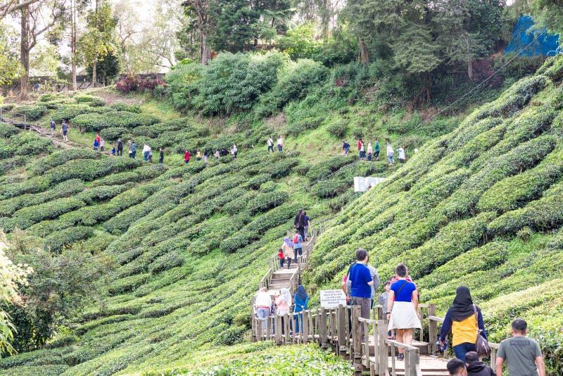 MONTANHAS DE CAMERON, MALÁSIA, O 6 DE ABRIL DE 2019: Turista que faz sua maneira ao centro do chá de BOH Sungai Palas foto de stock royalty free