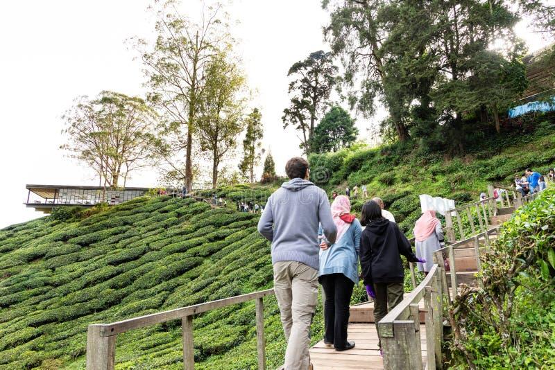 MONTANHAS DE CAMERON, MALÁSIA, O 6 DE ABRIL DE 2019: Turista que faz sua maneira ao centro do chá de BOH Sungai Palas, ponto popu foto de stock royalty free