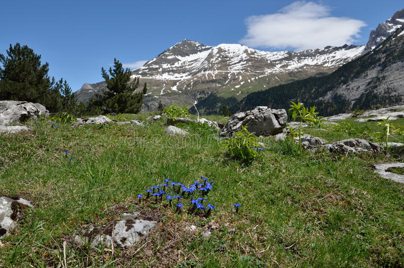Montanhas de florescência da inclinação na primavera fotografia de stock