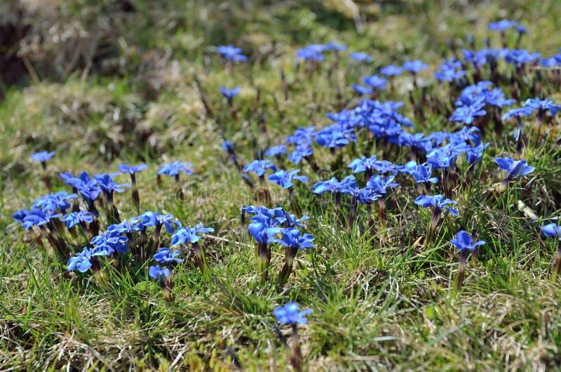Montanhas de florescência da inclinação na primavera imagens de stock