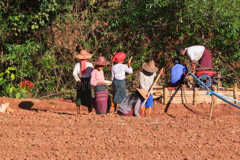 Montanhas de Kalaw, Myanmar - 18 de novembro de 2019: Fazendeiros locais que trabalham nas montanhas em torno de Kalaw e de lago  imagem de stock