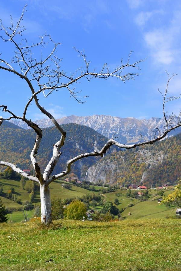 Montanhas de Romênia a Transilvânia imagem de stock