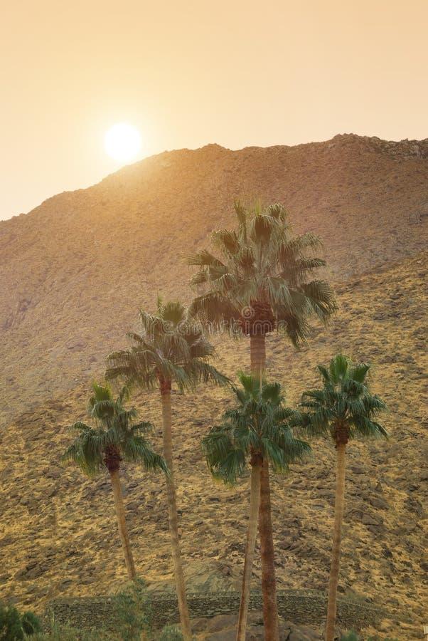 Montanhas de San Jacinto imagens de stock royalty free