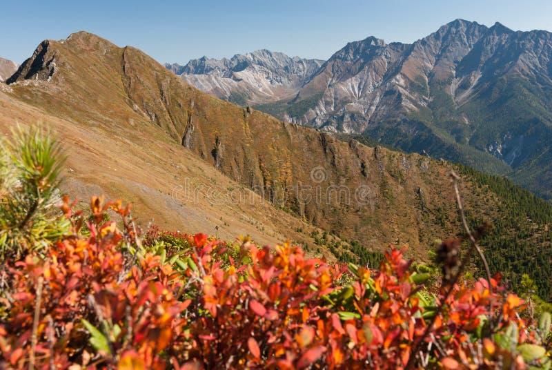 Montanhas de Sayan fotos de stock royalty free