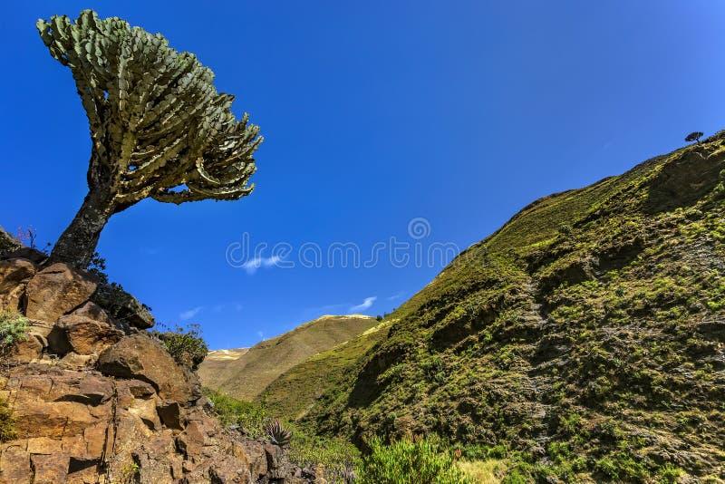 Montanhas de Simien, Etiópia imagem de stock