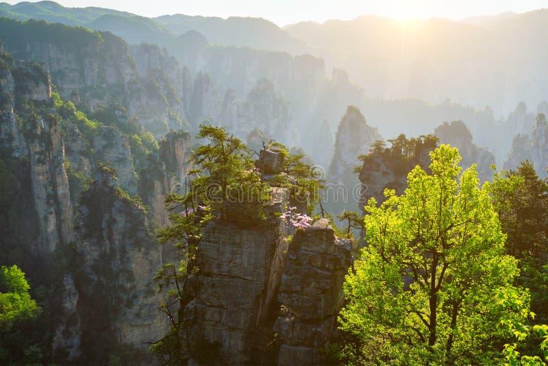 Montanhas de Zhangjiajie, China foto de stock royalty free