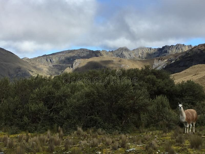 Montanhas do EL Cajas imagem de stock royalty free