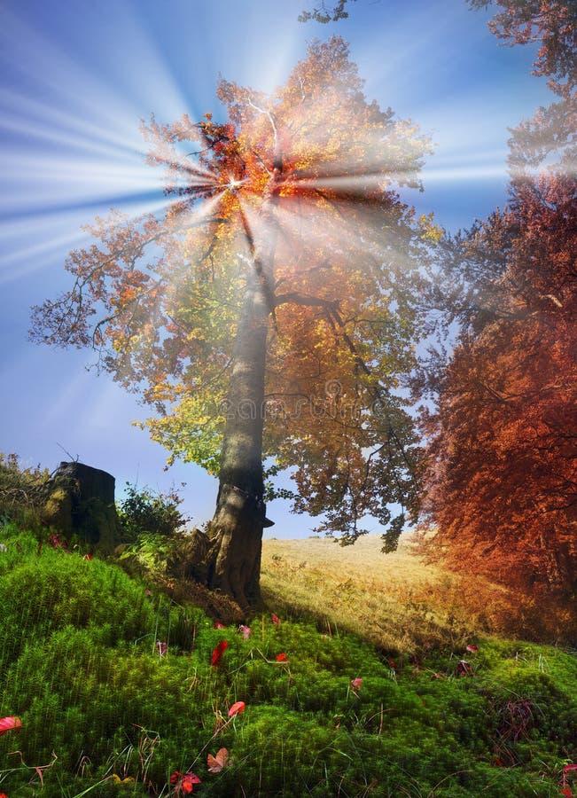 Montanhas do outono de Ucrânia fotos de stock