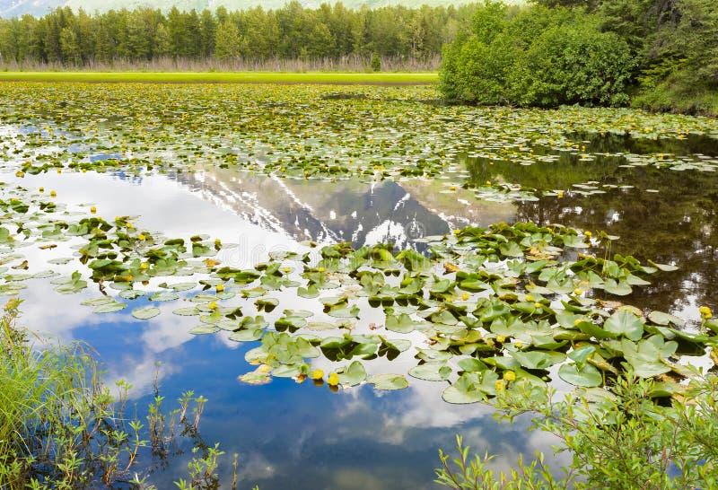 Montanhas do ` s Chugach de Alaska que refletem em um lago fotos de stock royalty free