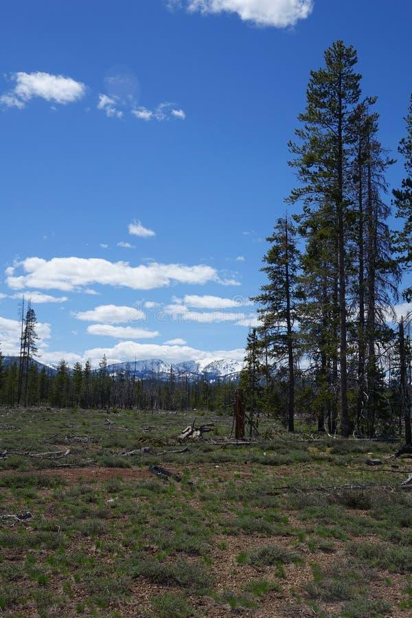 Montanhas do Sawtooth - Idaho imagem de stock royalty free