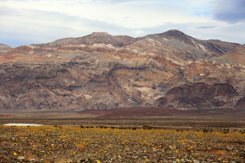 Montanhas do Vale da Morte Califórnia e Wildflowers do deserto fotos de stock royalty free