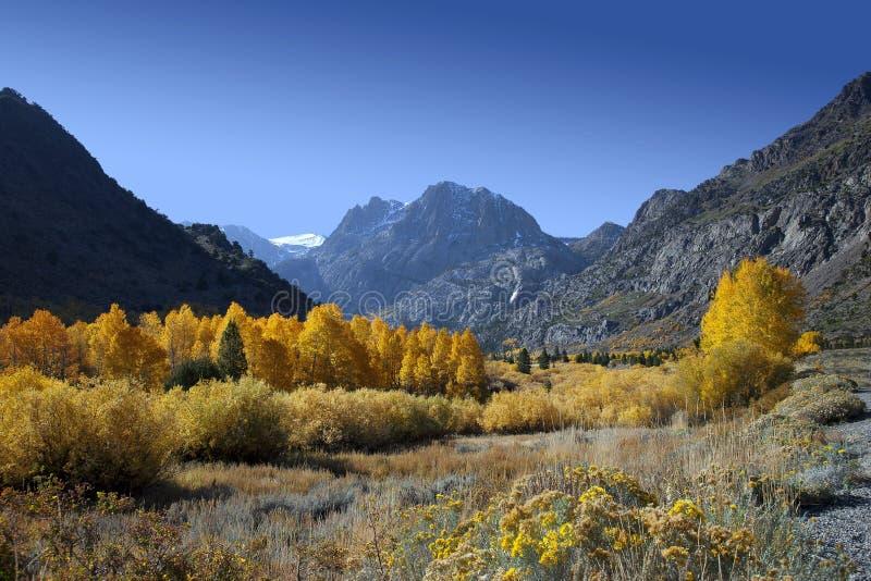 Montanhas e álamos tremedores fotos de stock royalty free