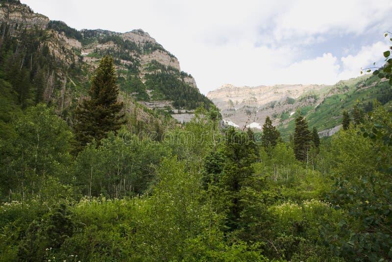 Montanhas e árvores de Utá do norte imagens de stock