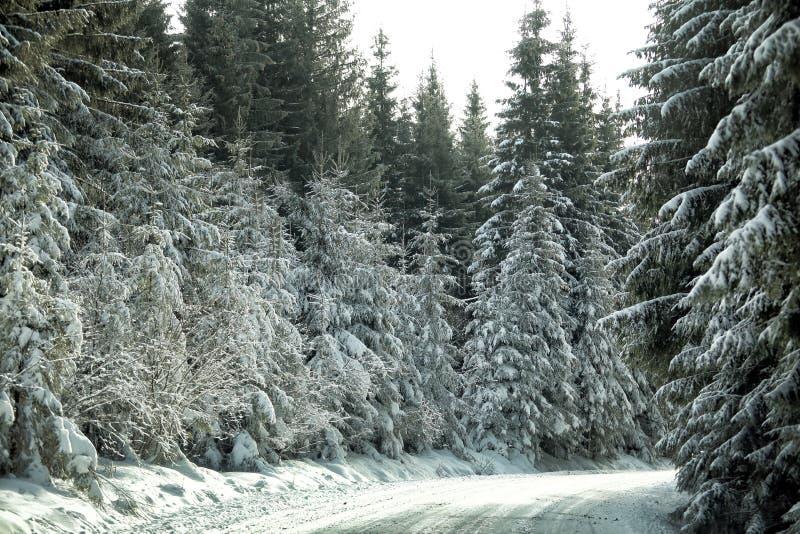 Montanhas e estradas romenas imagem de stock royalty free