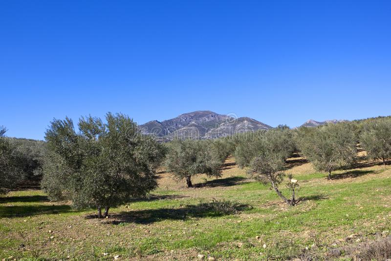Download Montanhas E Ofl A Andaluzia Dos Bosques Verde-oliva Imagem de Stock - Imagem de paisagem, bosques: 107528625