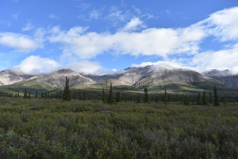 Montanhas e paisagem das árvores fotos de stock royalty free