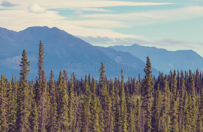 Montanhas em Alaska fotos de stock royalty free