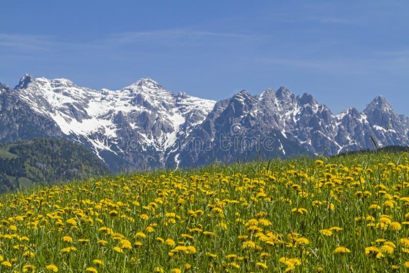 Montanhas Lofer na primavera fotografia de stock