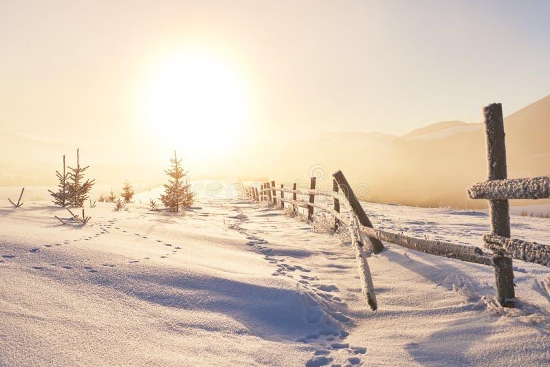 Montanhas majestosas da paisagem misteriosa do inverno no inverno Árvore coberto de neve do inverno mágico Cartão da foto foto de stock royalty free