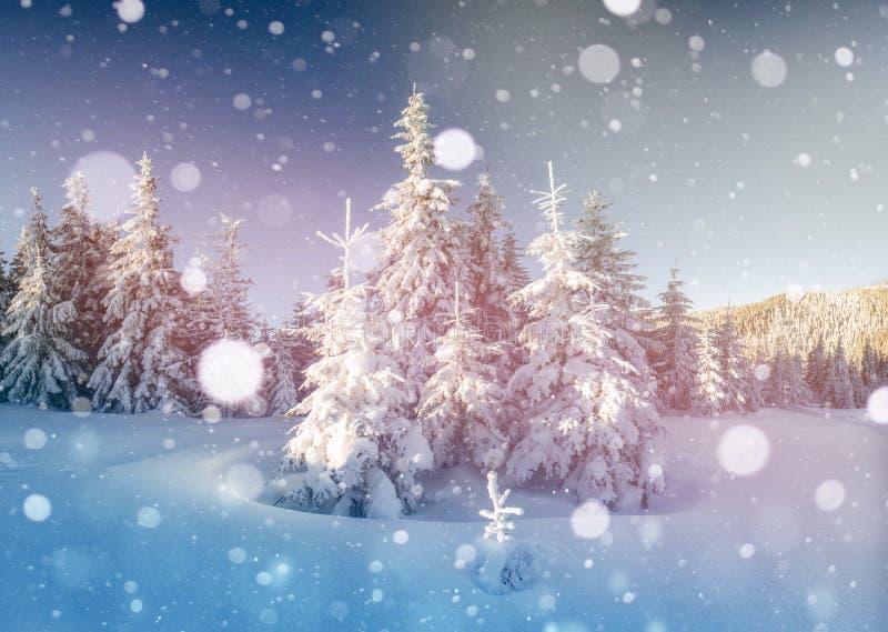 Montanhas majestosas da paisagem misteriosa do inverno no inverno Árvore coberto de neve do inverno mágico Cartão da foto Bokeh foto de stock royalty free