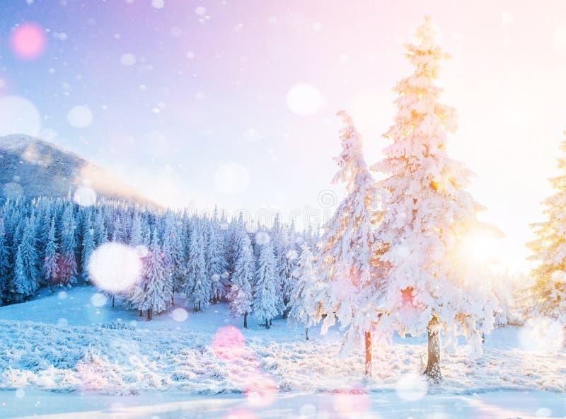 Montanhas majestosas da paisagem misteriosa do inverno no inverno Árvore coberto de neve do inverno mágico Cartão da foto Bokeh imagem de stock royalty free