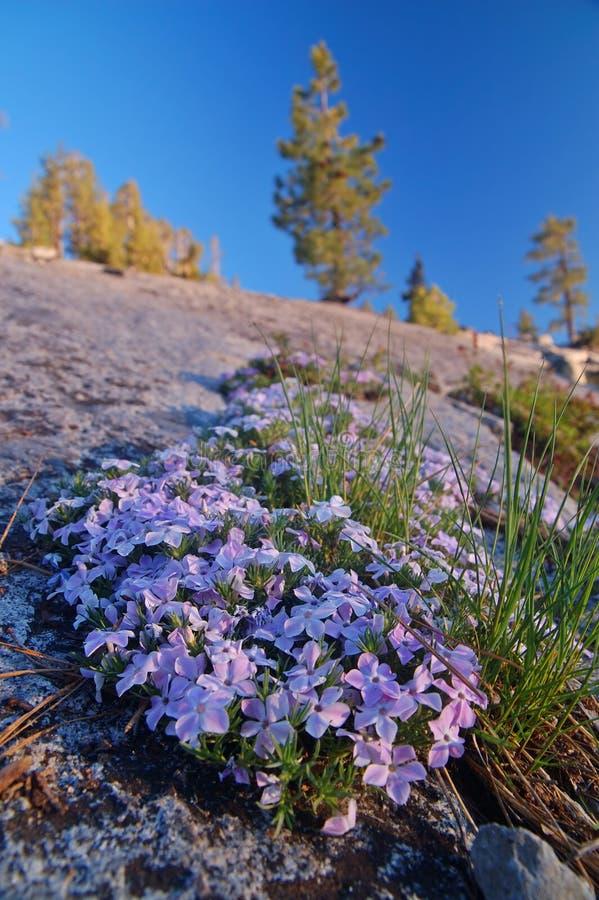 Montanhas na primavera fotos de stock royalty free