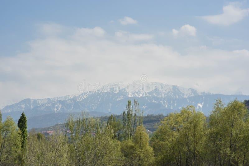 Montanhas nevado na distância com os oftrees de um bosque imagem de stock