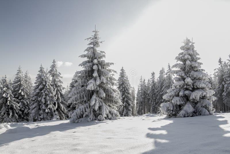 Montanhas no inverno, árvores cobertos de neve no sol fotografia de stock