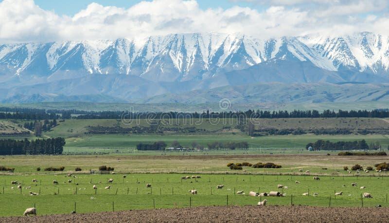 Montanhas snowcapped bonitas com cultivo de carneiros na ilha sul de Nova Zel?ndia fotografia de stock