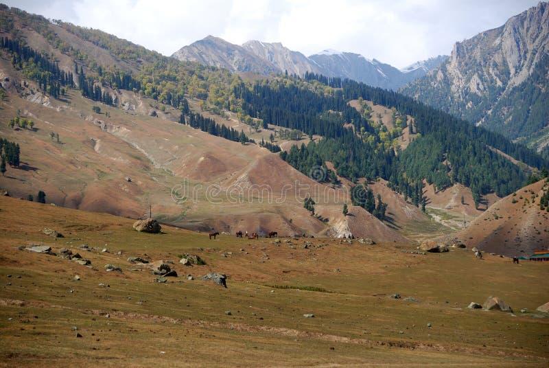 Montanhas, Sonamarg, Kashmir, India foto de stock royalty free