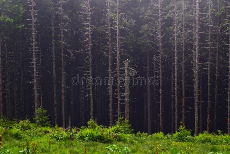 Montanhas ucranianas fotografia de stock royalty free