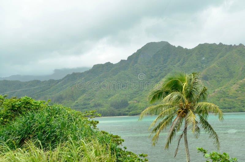 Montanhas verdes musgosos lindos, oceano azul, e palmeira em Oahu, Havaí foto de stock royalty free