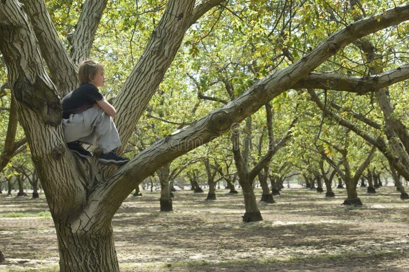 Montanhista da árvore fotografia de stock