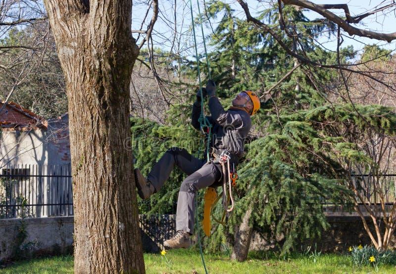 Montanhista da árvore imagem de stock