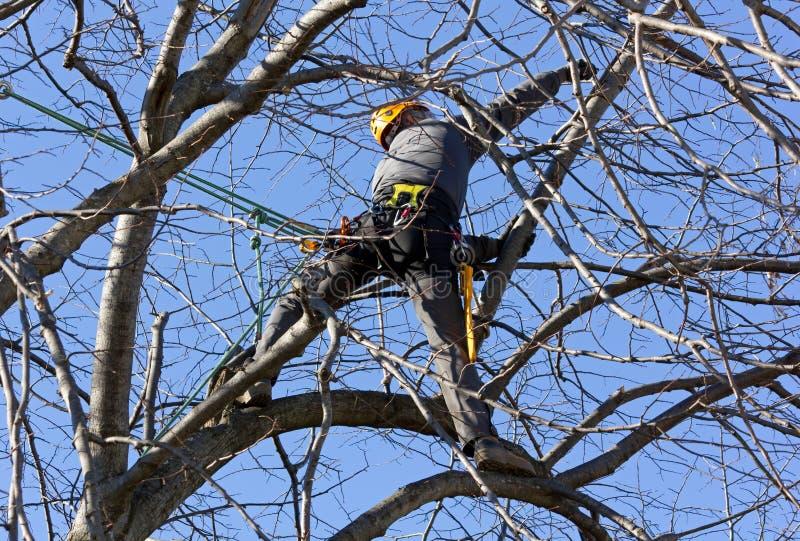 Montanhista da árvore entre ramos fotos de stock royalty free