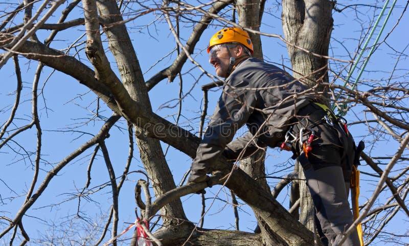 Montanhista da árvore entre ramos imagem de stock