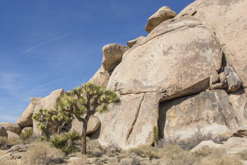 Montanhista de rocha em Joshua Tree National Park fotos de stock royalty free
