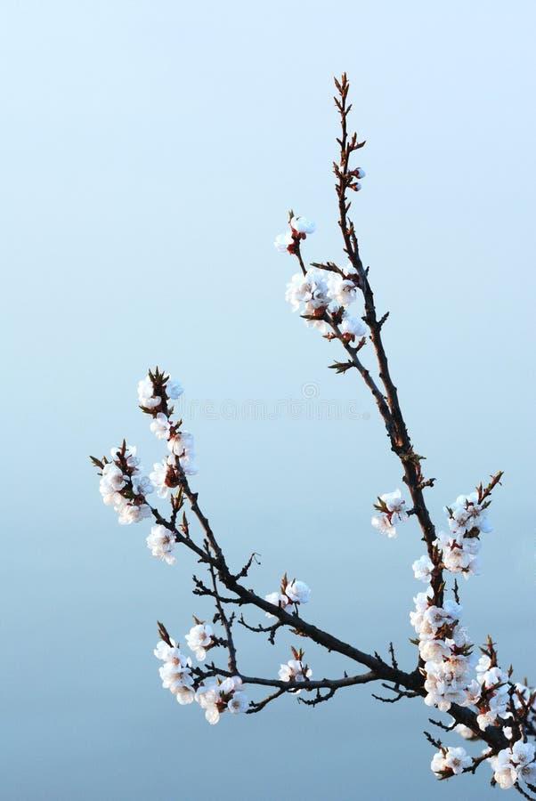 Montante japonés. Resorte foto de archivo libre de regalías